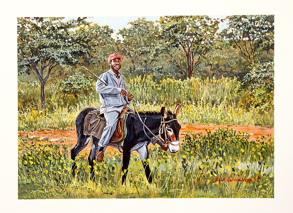 Cattle herder on donkey, Nokaneng, Botswana